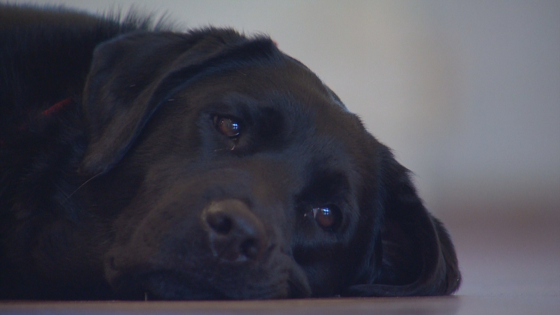 Flower Mound adds 4 legged fire investigator