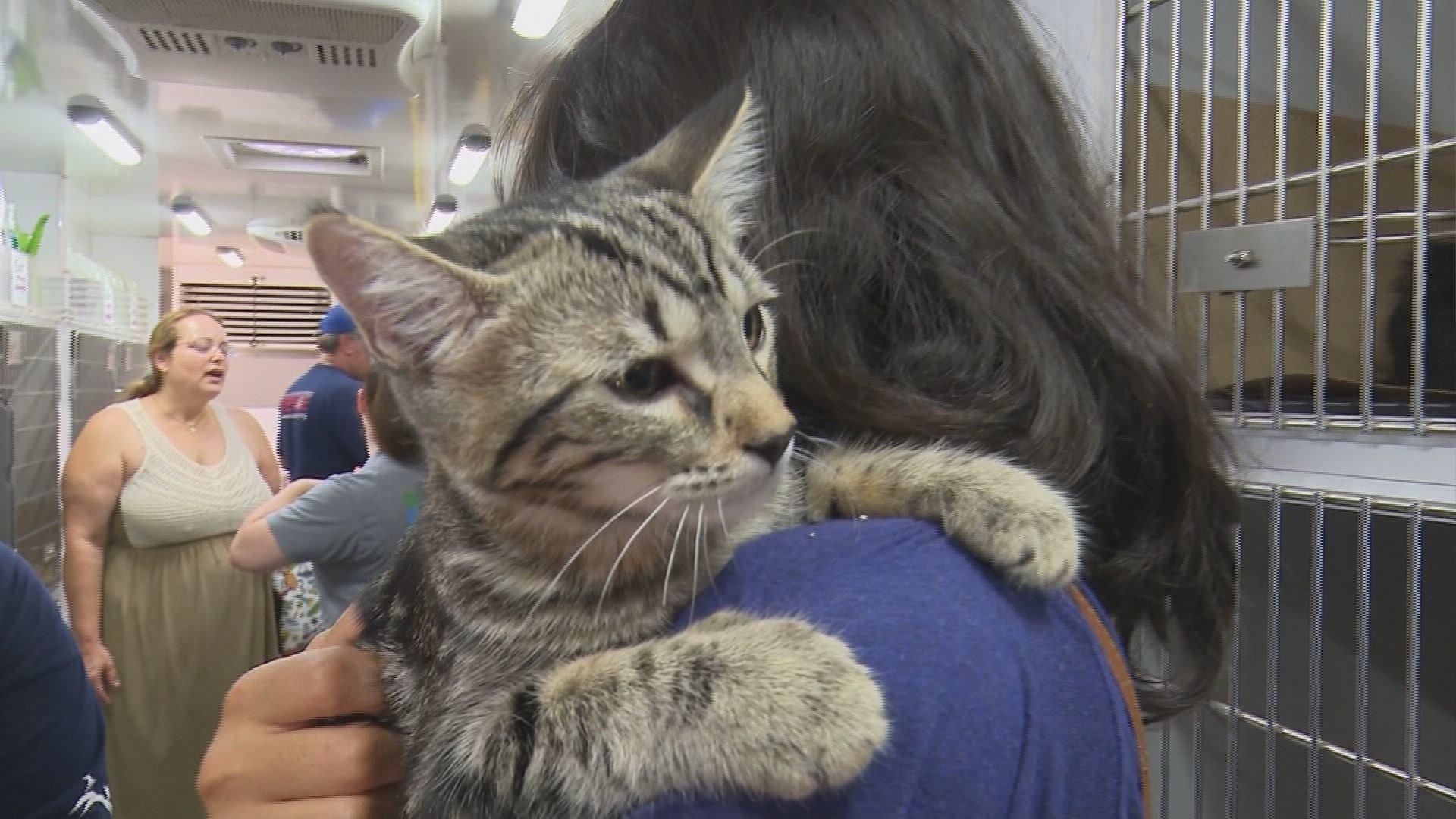 animal evacuees up for adoption